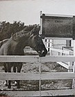 Original Photo CHIEF The  Last Calvary Horse - Ft. Riley Kansas 1965