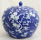 Chinese Qing Guangxu White Slip on Blue Ground Porcelain Ginger Jar