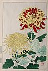 Japanese Kacho-e Woodblock Print Chrysanthemums Shodo