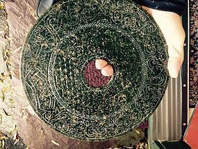China jade bi disc