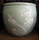 A Large Celadon Glaze Fish Bowl With White Slip