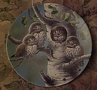 Knowles The Tree House Northern Pygmy owls 3rd plate