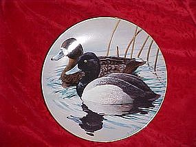 Lesser Scaup, Nature's Heritage, Waterfowl of America