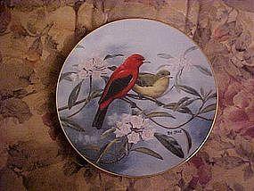 Scarlet Sunrise, Treasury of Songbirds, Rob Stine