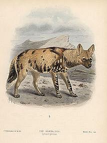 Hyena Dog Mivart Dogs Jackals Wolves Foxes