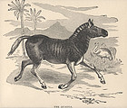Extinct Quagga and Ostrich Print 1890 Friend and Foe