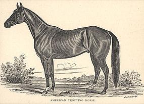 Print  American Trotting Horse 1890 Friend and Foe