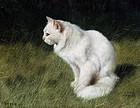 """White Cat"" by Arthur Heyer (1872-1931)"