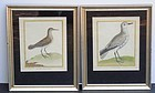 Pair of Martinet Bird Prints, ca. 1700-1783.
