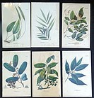 Set of Six Botanical Lithographs, circa 1830