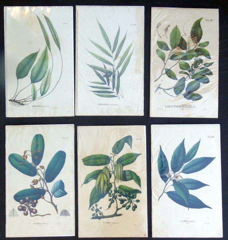 Set of Six Botanical Lithographs, circa 1830
