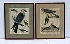Alex Wilson American Ornithology Birds Engraved by A. Lawson 19th C.
