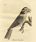 John Latham, Birds, 1822.