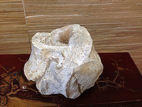 nautilus fossil crystalized dinosaurs bone