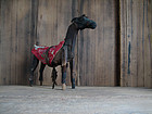 Antique Japanese Wooden Horse