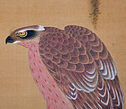 Edo period Japanese Hawk Painting, Tomiyasu (Fu-an)