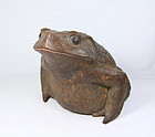 china Huge bamboo frog very rare