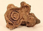 Ancient Moroccan Stromatolite fossil up to 3 Billion years old