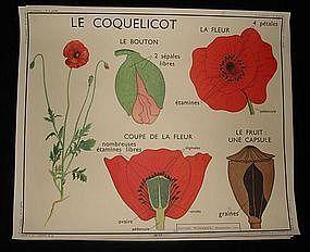 Vintage French Botanical School Poster Floral 17/18