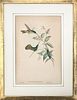 Hummingbirds original J. Gould Lithograph c.1850