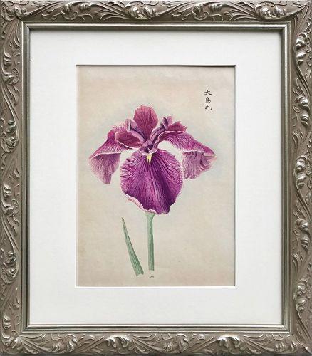 Antique Japanese Woodblock Print of a Iris C.1900