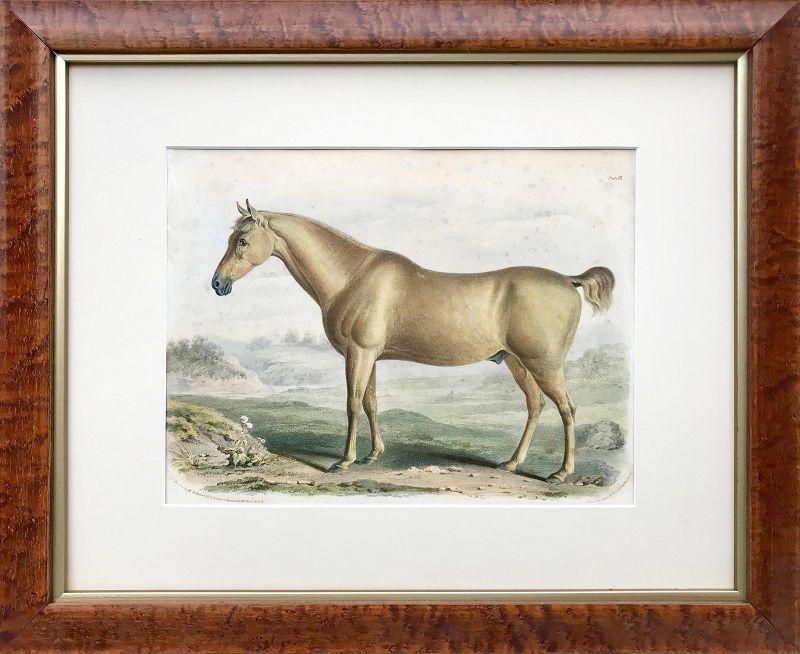 Antique Horse Color Lithographs London 1840 Francis Nicholson