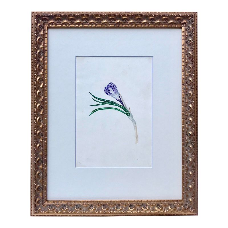 Antique Floral Watercolor Botanical Tulip Painting 19th C.