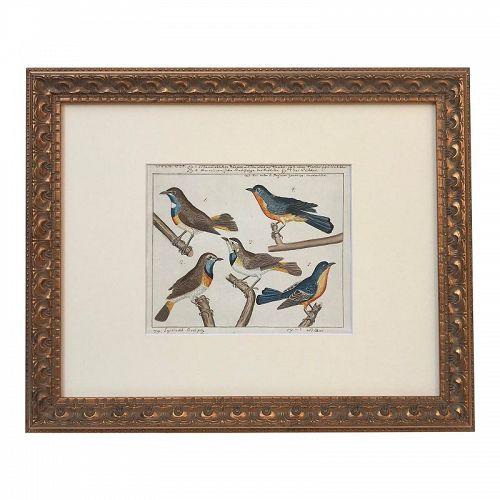 Antique 18th C. Watercolor Birds Ornithological Study 1776