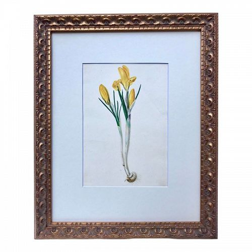 Original Antique Watercolor Floral Botanical Painting C.1850