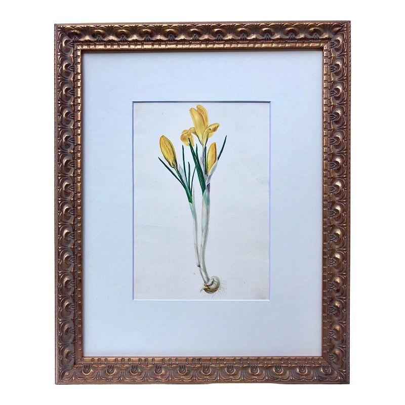Original Antique Watercolor Floral Botanical Painting C.1850
