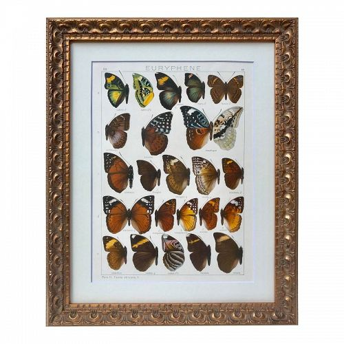 Antique African Butterfly Specimens Lithograph by Seitz 1909