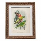 Antique Hand Color Lithograph of Parrots by Mathew C.1910
