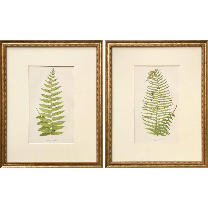 Antique Pair of Botanical Lithographs Fern Prints by Edward J. Lowe
