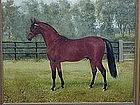 Portrait Thoroughbred Horse  Antique oil c.1890
