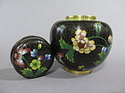 Cloisonne Enamel Jar and Cover from China, Guangxu (1875-1908)
