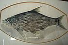 Chinese Watercolour Painting of Fish - circa 1800-1850