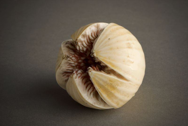 A Japanese study of an ivory fig by Ando Rokuzan