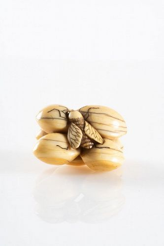 A Japanese ivory netsuke of ginkgo nuts