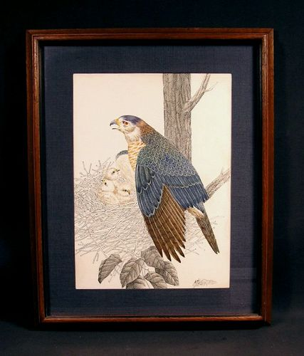 Very Fine Original Ink and Watercolor painting Framed Hawk Family