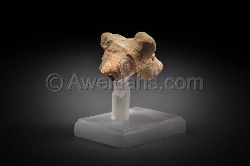 Ancient philistine fragmentary animal head, 1200 BC