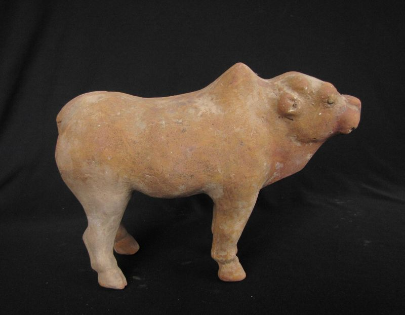 Tang Oxen