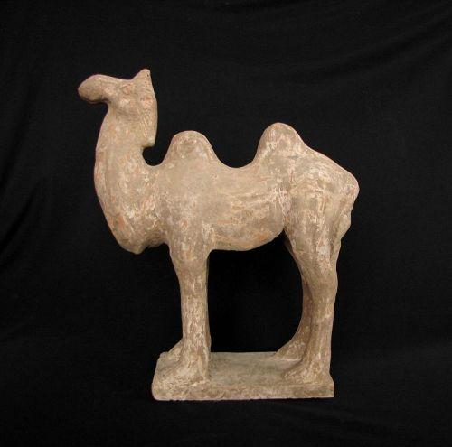 Tang Camel