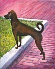 "Portrait Painting of a Rescue Dog ""Sophie Baby"""