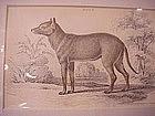 Print - Crabodage of Surinam Aguaradog