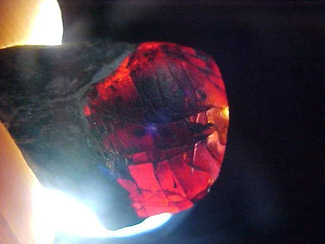 Unique Red Fire Opalized Dinosaur Toe Bone