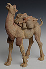 Tang Dynasty, Chinese Painted Pottery Standing Camel with Oxford Test