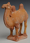 Tang Dynasty, Chinese Painted Pottery Standing Camel