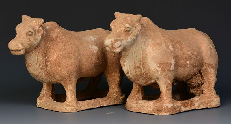 Tang Dynasty, A Pair of Chinese Pottery Standing Oxen