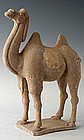 Tang Dynasty Painted Pottery Camel
