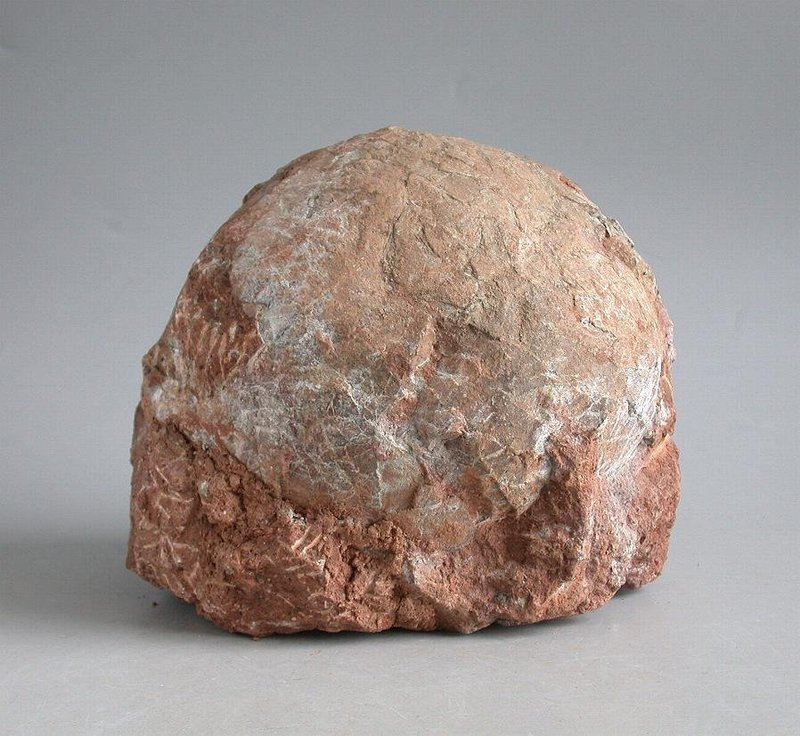 Genuine Dinosaur Egg Fossil - Hadrosaur